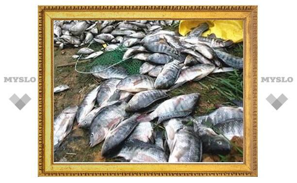 В водоемах Тульской области жара убивает рыбу
