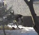 По ул. Первомайской в Туле бегал дикий олень