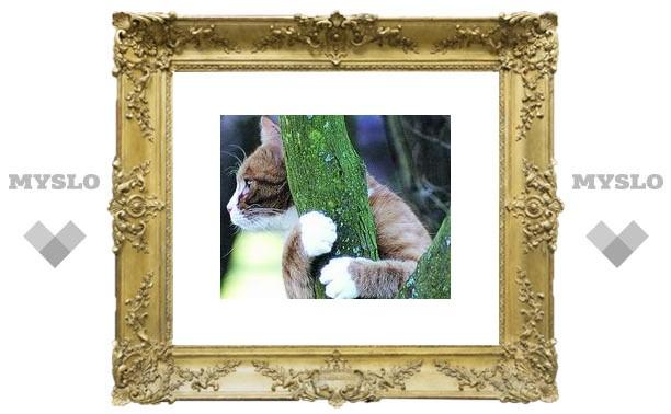 Вы когда-нибудь видели скелет кошки на дереве?