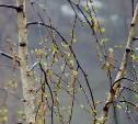 Погода в Туле 21 апреля: пониженное давление, ветер и гололедица