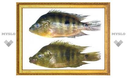 Рыбьи губы поставили рекорд по скорости эволюции