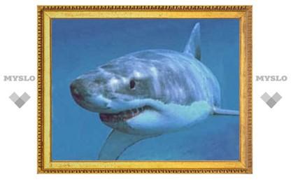 В Приморье акула откусила отдыхающему руки