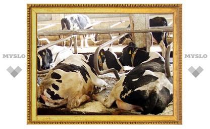 В Туле на исследование коров выделят 300 000 рублей