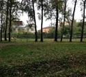 В Центральном парке открыли площадку для выгула собак