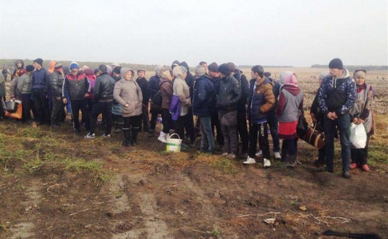 В Воловском районе на полях работали более 80 нелегалов