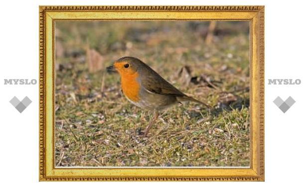 """Исследователи выяснили местоположение """"компаса"""" птиц"""