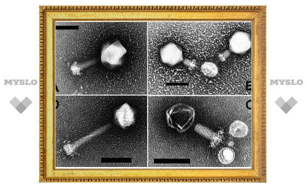 За кислород в земной атмосфере оказались ответственны вирусы