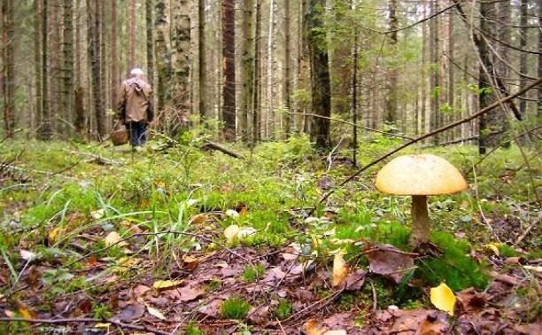 Памятка МЧС: как не заблудиться в лесу
