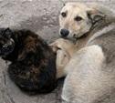 Проблема бездомных животных - обсудим все вместе?