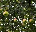 «Ясная Поляна» рассказала «Яблочную историю»