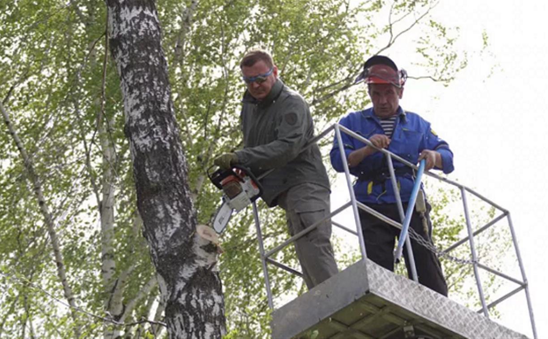 В Баташах Алексей Дюмин показал мастер-класс по опиловке и посадке деревьев