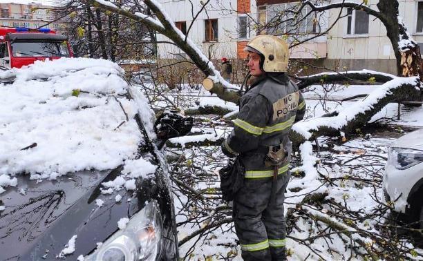 Сводка МЧС: в Тульской области ветер и снег повалили 70 деревьев