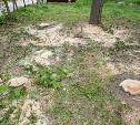 Мне нужнее: в тульском дворе подрядчик самовольно вырубил 15 ясеней и забрал их себе