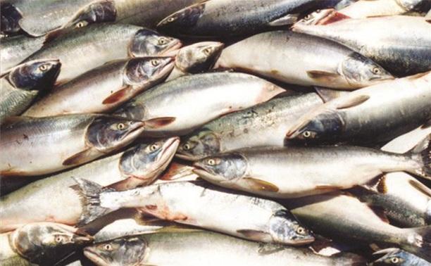 Туляки посоревнуются в рыбной ловле