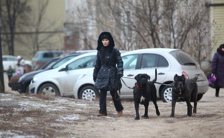 В России усовершенствуют законодательство о защите животных