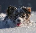 Погода 16 февраля: в Туле снова похолодает