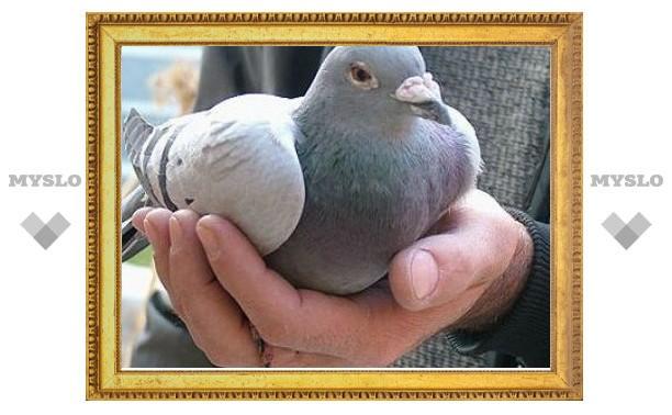Туляк сядет в тюрьму за кражу голубей