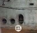 В Туле собака-отшельник два года терроризирует многоэтажку