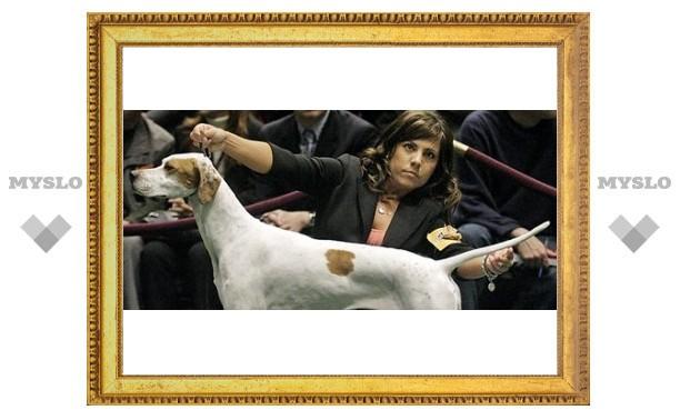 Под Тулой пройдет выставка собак
