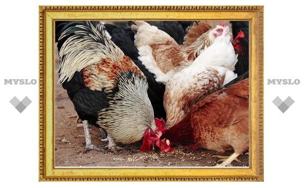 В Тульской области участились кражи домашних животных