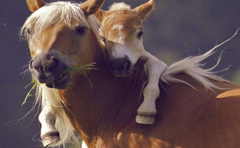В Одоевском районе уголовник похитил лошадь и жеребенка