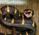 Тульский экзотариум приглашает на День змей