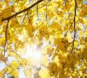 На выходных в Туле продолжится «зимнее бабье лето»