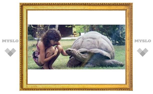 Тулякам покажут самую большую черепаху