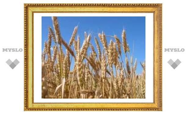 Тульская сельхозярмарка отменяется