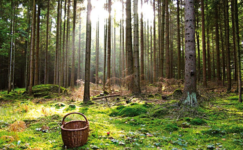 Памятка МЧС: как тулякам не заблудиться в лесу