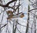 Зимняя сказка: парки Тулы в инее