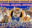 Туляков приглашают на уникальную контактную зоовыставку «Федерация кошек»