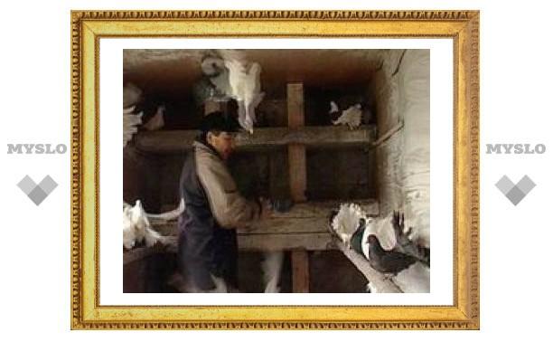 Туляк впал в кому из-за любимых голубей
