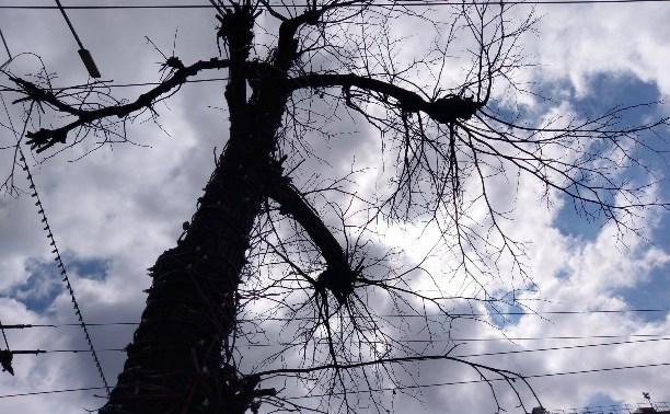 Почему не распускаются деревья на проспекте Ленина в Туле?