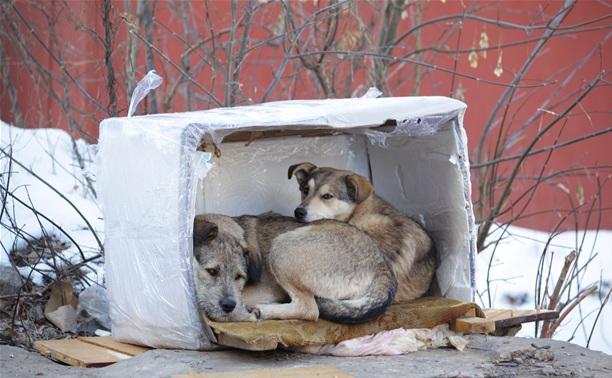 Приют для животных построят совместно с Ленинским районом