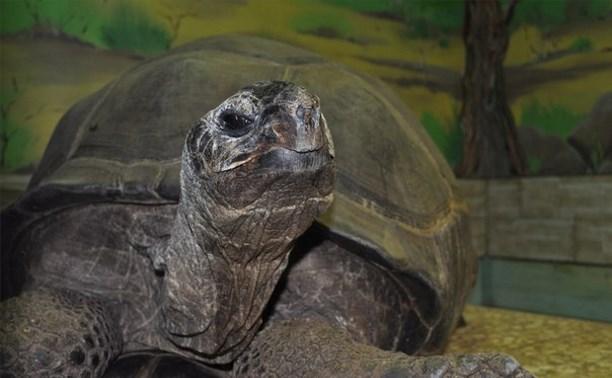 В Тульском экзотариуме умерла 150-летняя черепаха