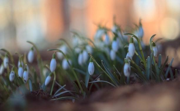 На следующей неделе в Тулу придет «настоящая весна»