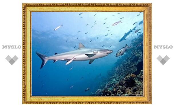 В Египте акула откусила руку российскому туристу