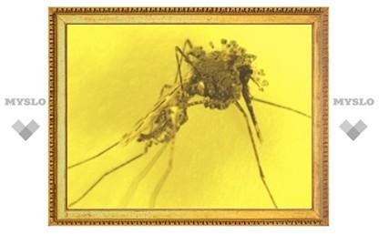 Создан генномодифицированный грибок для борьбы с малярией