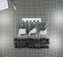 78 пакетов с наркотиками: В Щекино сотрудники Росгвардии задержали наркодельцов