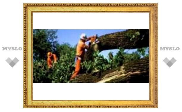 Под Тулой уничтожили 12 тысяч дубов