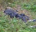 В Тульской области в лесу нашли труп мужчины
