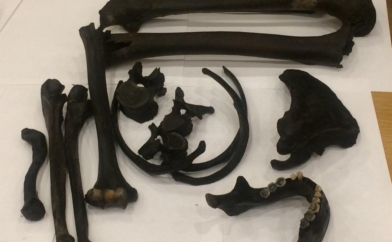 Стало известно, кому принадлежали кости, найденные на ул. Металлистов в Туле