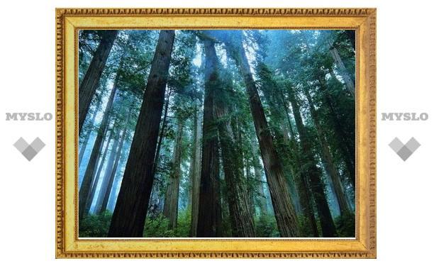 В лесу под Тулой заблудились шесть человек