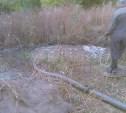 В Богородицке 4200 домов остались без холодной воды