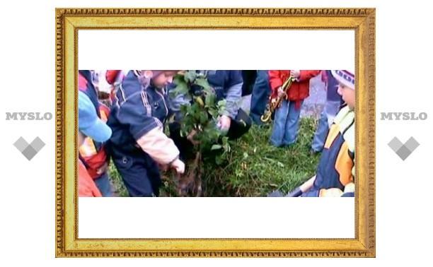 Тульские школьники сажают деревья