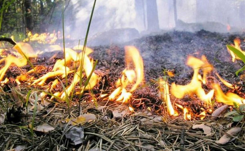 В Тульской области объявлен высший класс пожарной опасности