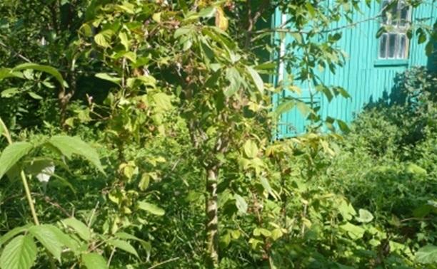 В Хомяково зверски убили 83-летнюю женщину