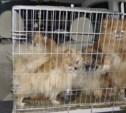 Похитители собак отправятся под суд