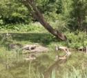 2015 год пройдет в Туле под лозунгом благустройства парков
